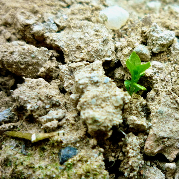 little plant in dirt
